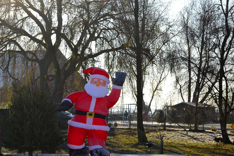 Nordmann Excellent kerstbomen Hillegom